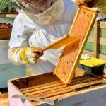 Product Spotlight: Urban Hive Honey